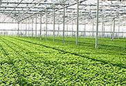 Greenhouse Growing